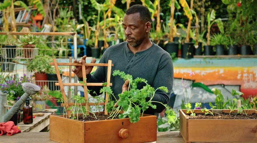 Ron Finley tending plants
